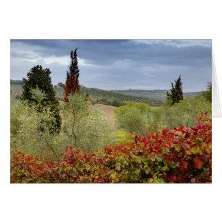 Cartes Vignoble près de Montalcino, Toscane, Italie