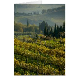 Cartes Vignoble, Toscane, Italie