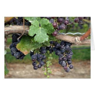 Cartes Vin sur la vigne