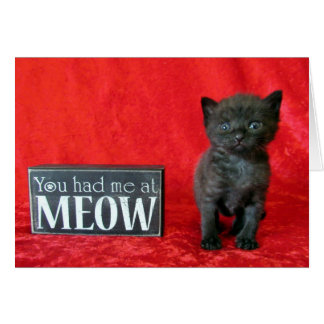 Cartes Vous m'avez eu au Meow - poivrez (aka dragée à la