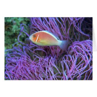Cartes Vue de côté d'un poisson d'anémone rose,