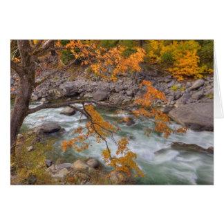 Cartes WA, réserve forestière de Wenatchee, arbre