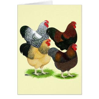Cartes Wyandotte :  Assortiment de coq