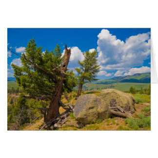 Cartes Yellowstone Boulder