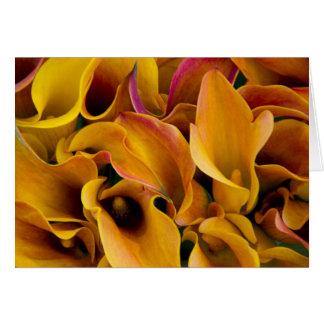 Cartes Zantedeschias colorés lumineux au