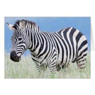 Cartes Zèbre de plaines ou zèbre commun (Quagga d'Equus)