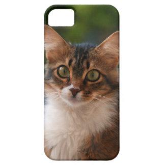 Cas mignon de téléphone de chaton coque iPhone 5