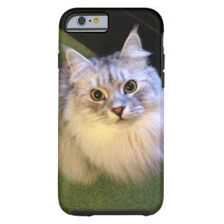 Cas sibérien élégant de l'iPhone 6 de chat