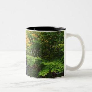 Cascade brouillée de roche, arbres verts et tasse 2 couleurs