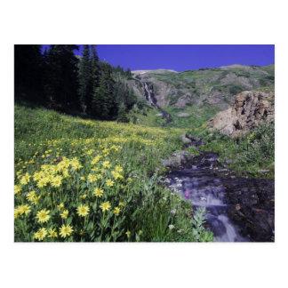 Cascade et fleurs sauvages dans le pré alpin, 2 carte postale