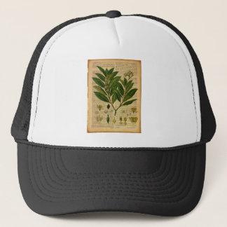 Casquette Copie botanique à la page de vieux livre