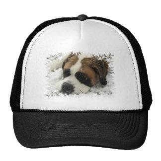 Casquette de baseball de chien de St Bernard