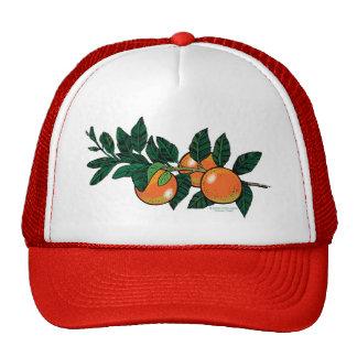 casquette de branche d'agrume