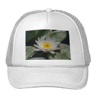 Casquette de nénuphar de Lotus blanc
