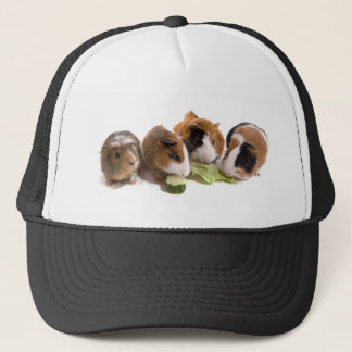 Casquette four guinea pigs who eat,