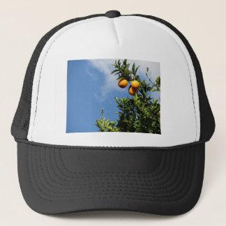 Casquette Fruits oranges accrochant sur l'arbre contre le