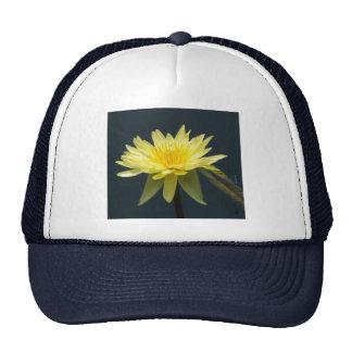 Casquette jaune de nénuphar de Lotus