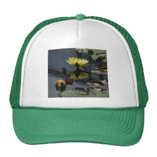Casquette jaune de nénuphars de Lotus