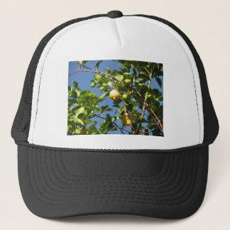 Casquette Le citron porte des fruits accrochant sur l'arbre