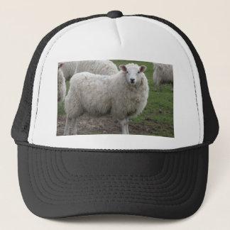 Casquette Moutons de Cheviot