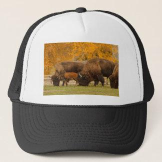 Casquette Nation de famille de bison