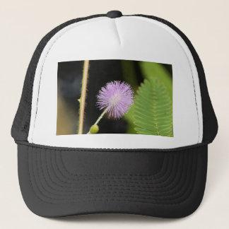 Casquette Plante sensible (pudica de mimosa)