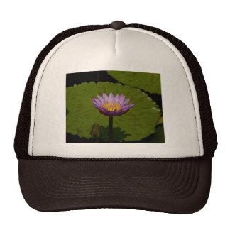Casquette pourpre de nénuphar de Lotus