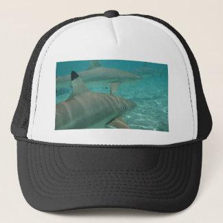 Casquette shark
