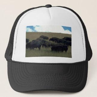Casquette Troupeau de bison dans l'herbe sèche