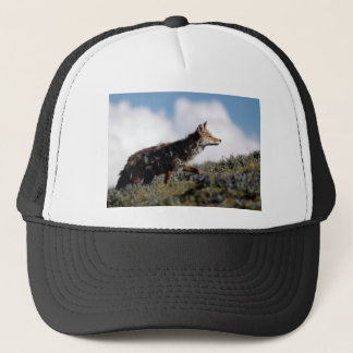 Casquette Un coyote marche en parc national de Yellowstone,