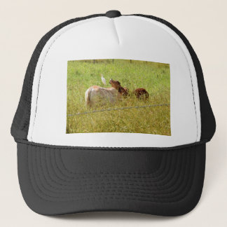 CASQUETTE VACHES QUEENSLAND RURAL AUSTRALIE