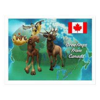 Castor et oie canadiens d'élans d'orignaux carte postale