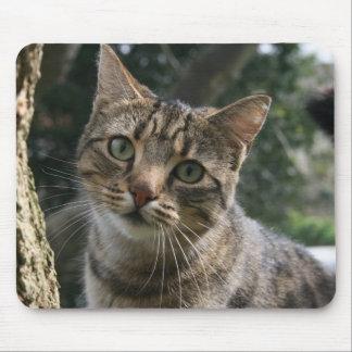 CAT TAPIS DE SOURIS