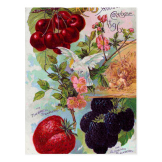 Catalogue annuel 1896 de fruit carte postale