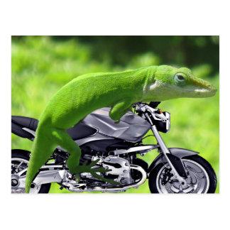 Cavalier hawaïen vert de Gecko Cartes Postales
