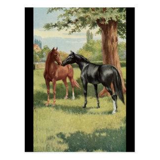 Cavalier vintage d'étalon de jument de cheval cartes postales