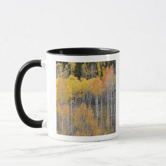 Cavité de Lambert, arbres 3 de tremble Mug