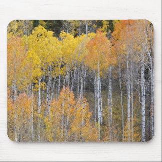 Cavité de Lambert, arbres 3 de tremble Tapis De Souris
