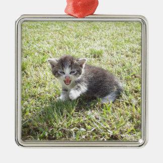 Ce chaton lutte pour la liberté ornement carré argenté