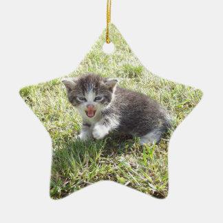 Ce chaton lutte pour la liberté ornement étoile en céramique