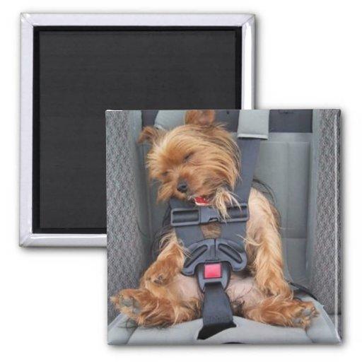 ceinture de sécurité de chiot aimant pour réfrigérateur