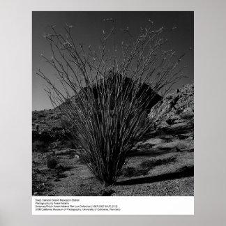 Centre de recherches profond de désert de canyon posters