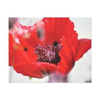 Centre rouge de pavot de belle photo en gros plan toiles