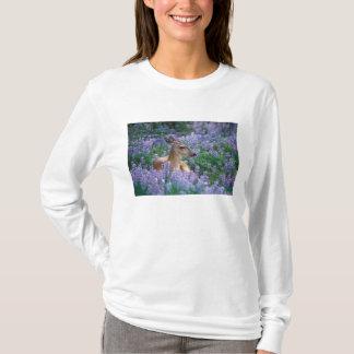 Cerfs communs à queue noire, daine se reposant t-shirt