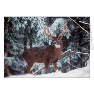Cerfs communs dans la carte de voeux de neige