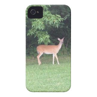 Cerfs communs dans les bois étuis iPhone 4