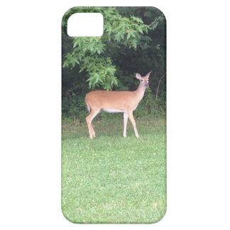 Cerfs communs dans les bois étuis iPhone 5