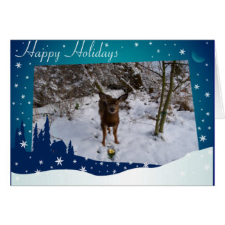 Cerfs communs de Noël Cartes De Vœux