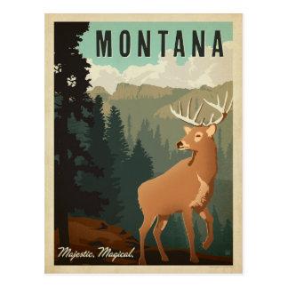 Cerfs communs du Montana | majestueux, magique Carte Postale