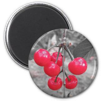 Cerises rouges de Montmorency sur l'arbre dans le Aimant